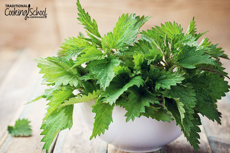stinging nettle in white bowl