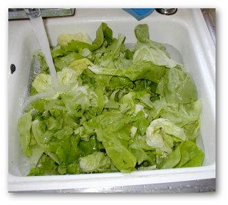 lettuce-wash