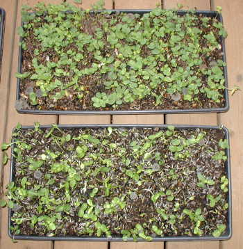 The Microgreens Are Coming In