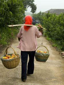 harvest basket peaches china-300
