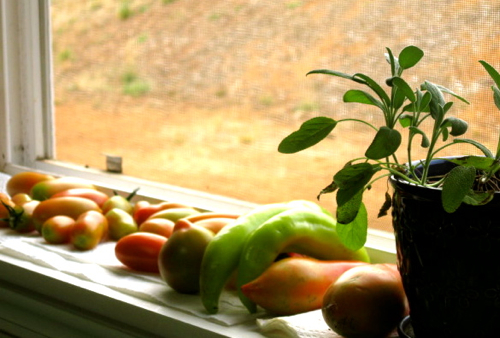 tomatoes and peppers on windowsill