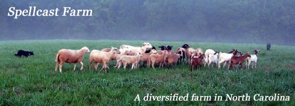 sheepandgoats-title