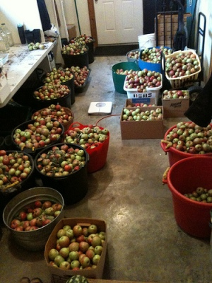 Apples for sale and cider