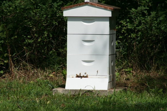 My first hive