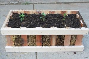 crate-planter