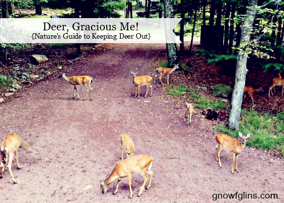 10 Tips To Keep Deer Out And Sanity In