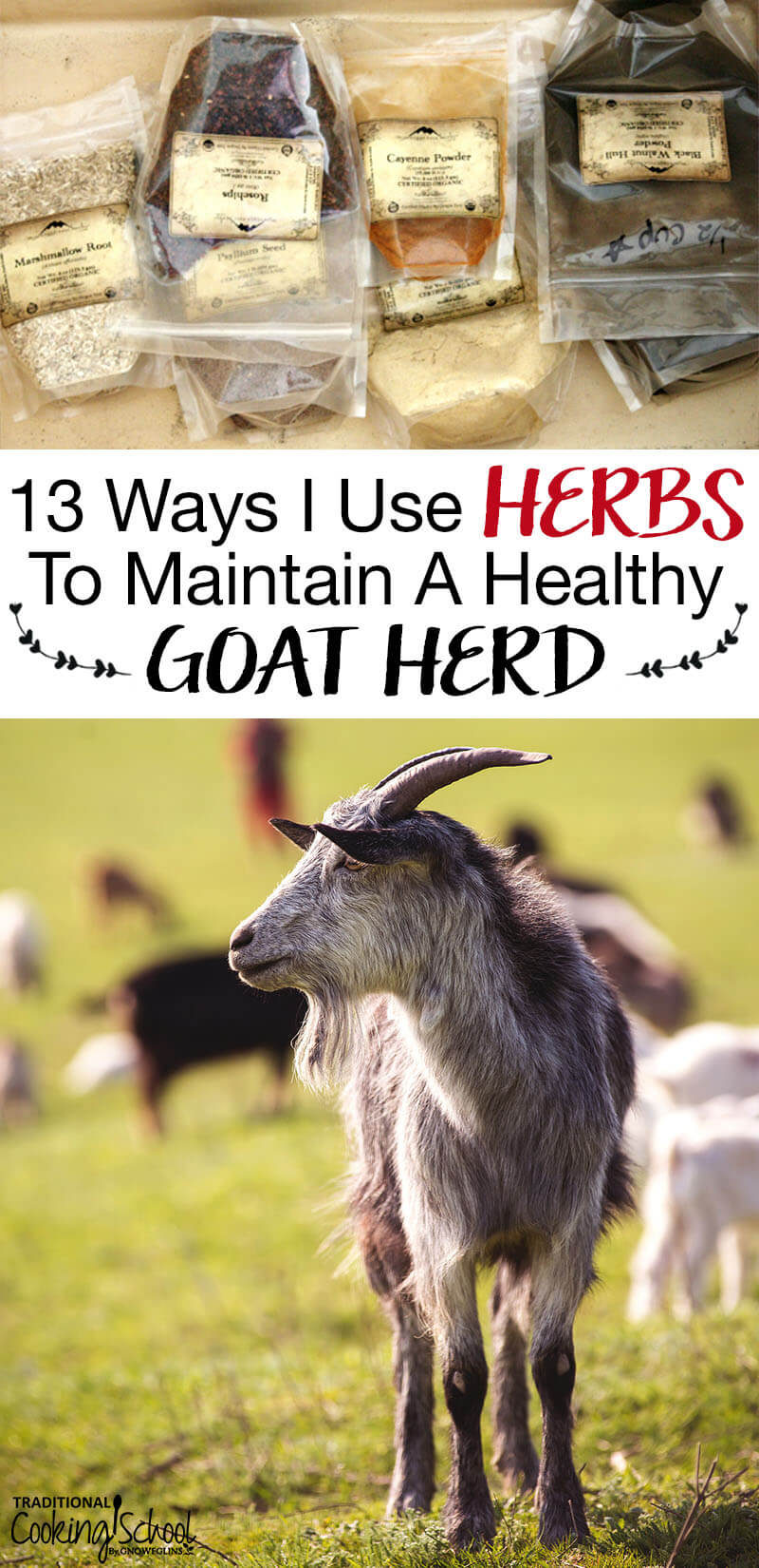 Image of a goat in a field and herbs in a bag on the table with text overlay