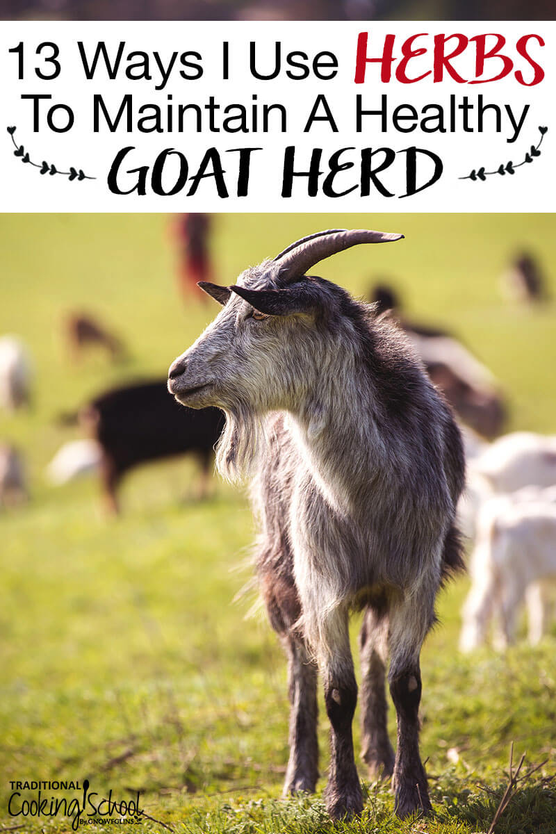Image of a goat in a field with text overlay