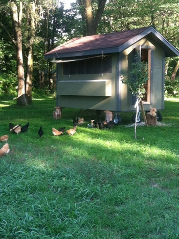 Rockin' the Green Life Farm | Welcome back to another season of farm and homestead tours! I'm ready for more entries for 2013! Please read here for guidelines . We're heading down home... to your farms! Urban, ... | TraditionalCookingSchool.com