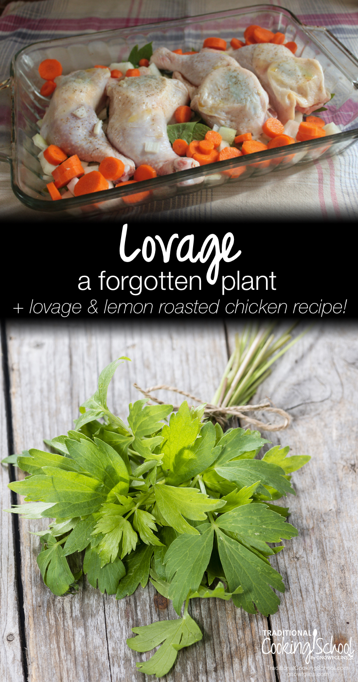 What Is Lovage + Lovage and Lemon Roasted Chicken Recipe | Lovage is a forgotten plant that deserves our attention once again. Learn about the benefits and uses of lovage, how to grow lovage, and then try it out with a lovage and lemon roasted chicken recipe! | TraditionalCookingSchool.com