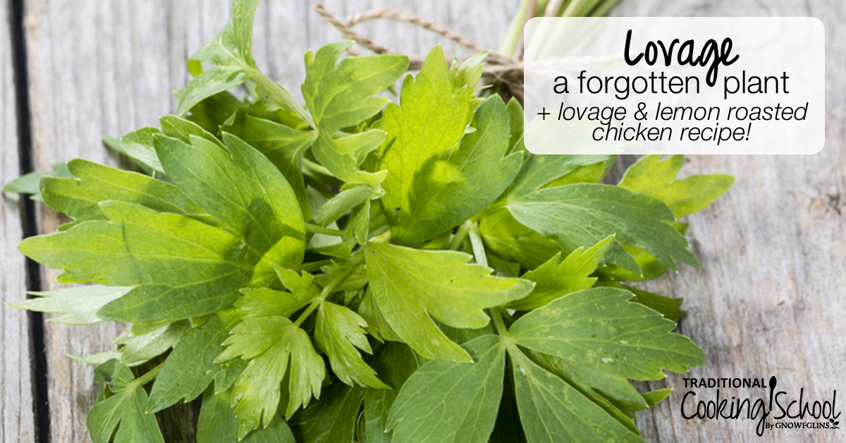 What Is Lovage? + Lovage and Lemon Chicken Recipe