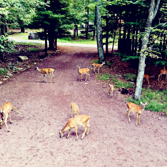 Nature's Guide To Keeping Deer Out Of Your Garden