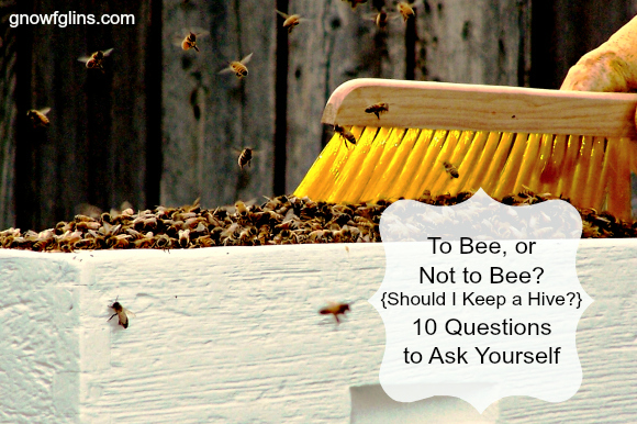 """To Bee, or Not to Bee? Should I Keep a Hive? 10 Questions to Ask Yourself 
