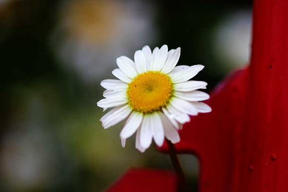 downhome-flower