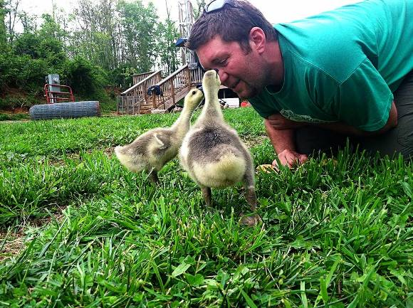 downhome-mike-goslings