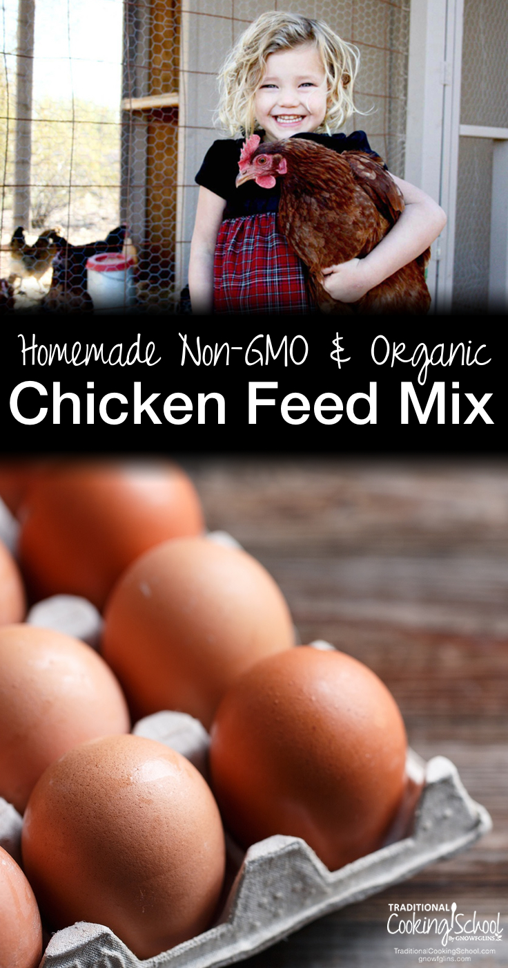 Homemade Non-GMO and Organic Chicken Feed Mix | We finally began enjoying the great benefit of having chickens: the eggs! That was until we read what we were feeding them. We had to do better, so we started feeding our flock homemade chicken feed. | TraditionalCookingSchool.com
