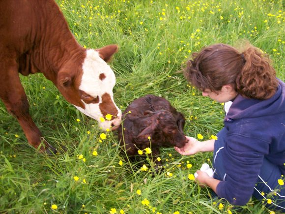 We're heading down home... to your farms! Urban, suburban, or rural -- whatever you're growing and doing, we want to see it. Today you get to visit Caitlyn and her parents at their farm in New York. On 60 acres, they raise chickens, Devon cattle and a large garden and orchards. Come on in and say hi! [by Wardee Harmon]