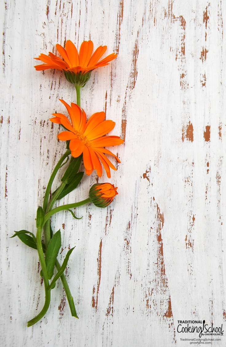 5 Anti-Inflammatory Herbs In Your Own Backyard | One of the reasons I love herbs so much is because of their ability to take care of every day symptoms. Here are 5 seemingly common plants that are anything but common when it comes to reducing inflammation and relieving swelling and pain. | TraditionalCookingSchool.com