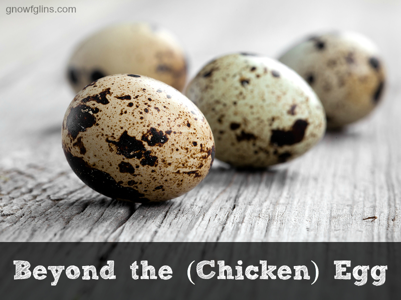 Beyond the (Chicken) Egg | All eggs are not created equal. By now, it is well known in the real food community that pastured chicken eggs are more nutrient-dense and healthy than their conventional counterparts. And, if you're willing to stray further off the beaten track, chickens aren't the only birds that lay delicious and healthy eggs. Quail, duck, and goose eggs are all popular alternatives to the chicken, offering variety and different nutritional benefits. | TraditionalCookingSchool.com
