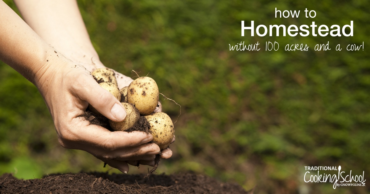 How To Homestead Without 100 Acres & A Cow