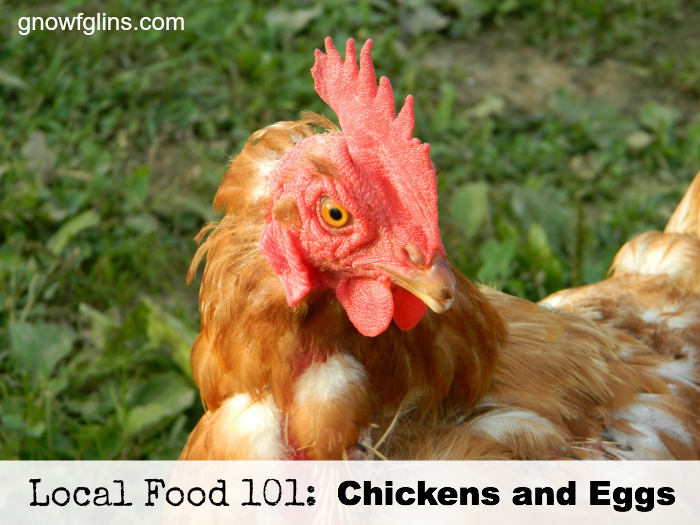 Local Food 101: Chickens and Eggs | How can you know if a particular food source is a wise and healthy choice? You start by talking to the farmer who produces it, asking questions that pertain to the type of food you're buying. In this post, we'll discuss chickens and eggs (and other poultry as well). Use these questions when approaching your local farmer or source. | TraditionalCookingSchool.com