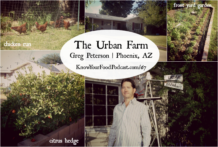 KYF #067: The Urban Farm with Greg Peterson | For the last 25 years, Greg Peterson has been urban farming on 1/3 acre city lot in Phoenix, Arizona. His home, The Urban Farm, is a showcase of beautiful and productive permaculture -- a chicken run, gardens, 85 fruit trees including apple and citrus hedges, and much more! Get to know Greg and The Urban Farm in today's podcast. Plus... the tip of the week! | KnowYourFoodPodcast.com/67