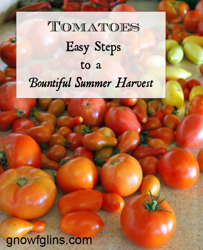 Tomatoes: Easy Steps to a Bountiful Summer Harvest | As every gardener knows, once you taste your own homegrown tomatoes, you'll never go back to store-bought. While these favorite garden vegetables are pretty easy to grow, here are a few tips designed to help you have a successful harvest. | TraditionalCookingSchool.com