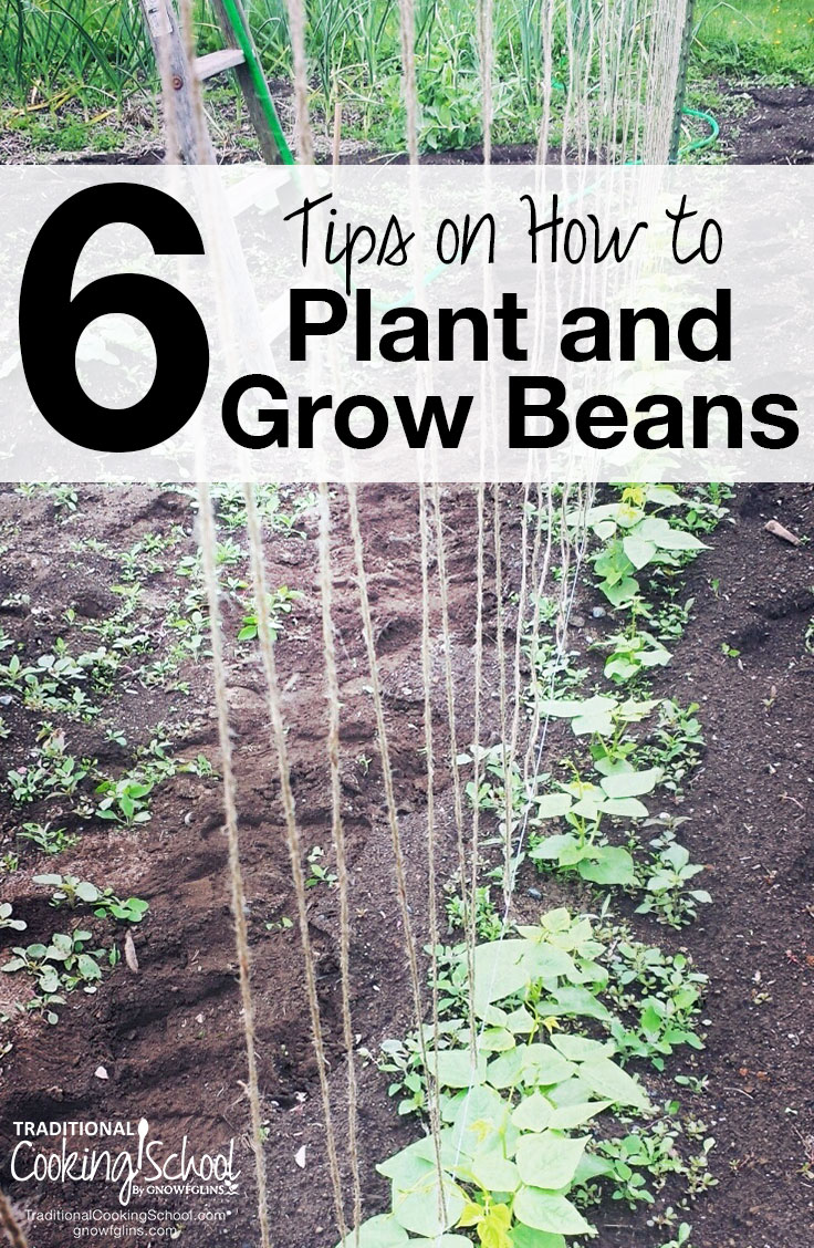 My Baby Plants Bean Manual Guide