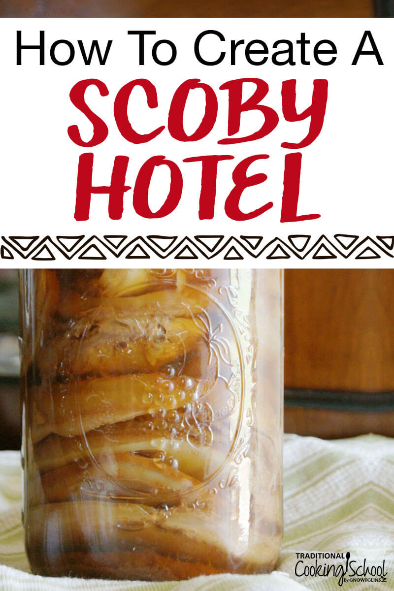 "a jar filled with SCOBYs and kombucha, a ""SCOBY Hotel""."