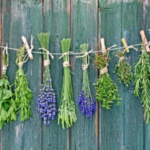 bundles of herbs drying from a clothesline
