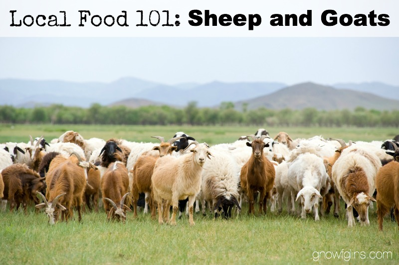 Local Food 101: Sheep and Goats | How can you know if a particular food source is a wise and healthy choice? You start by talking to the farmer who produces it, asking questions that pertain to the type of food you're buying. In this post, we'll discuss sheep and goats, including processing options and how to find good recipes. Use these questions when approaching your local farmer or source. | TraditionalCookingSchool.com