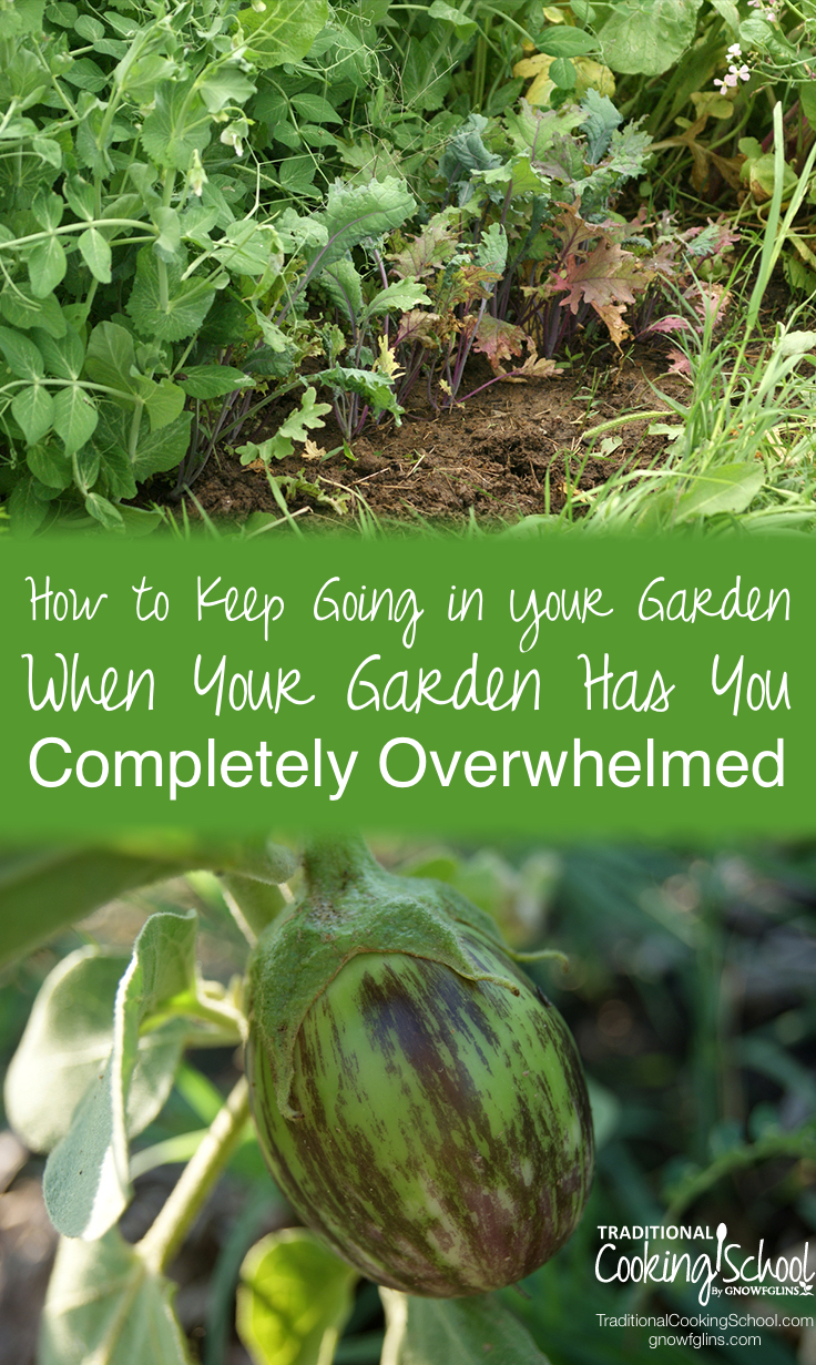 How to Keep Going In Your Garden When Your Garden Has You Completely Overwhelmed | In the spring, I'm gung-ho about gardening. By the time the late summer heat hits, weeds are out of control, a pest is ruining my sunflowers, and I'm behind on fall planting. I wonder: Why on earth am I doing this? Here are 7 things I've learned that keep me going when I'm overwhelmed. | TraditionalCookingSchool.com