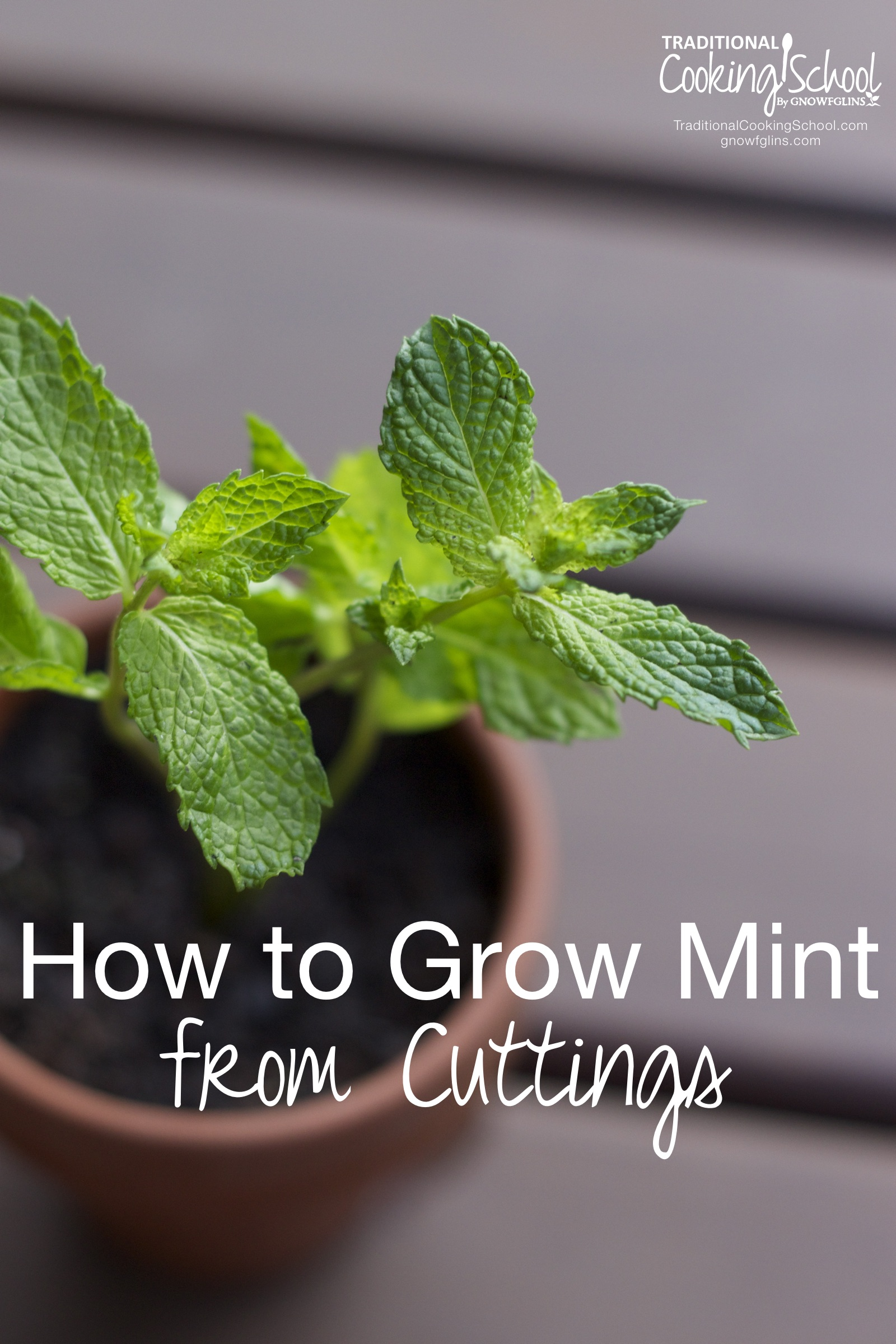 how to easily grow mint from cuttings. Black Bedroom Furniture Sets. Home Design Ideas
