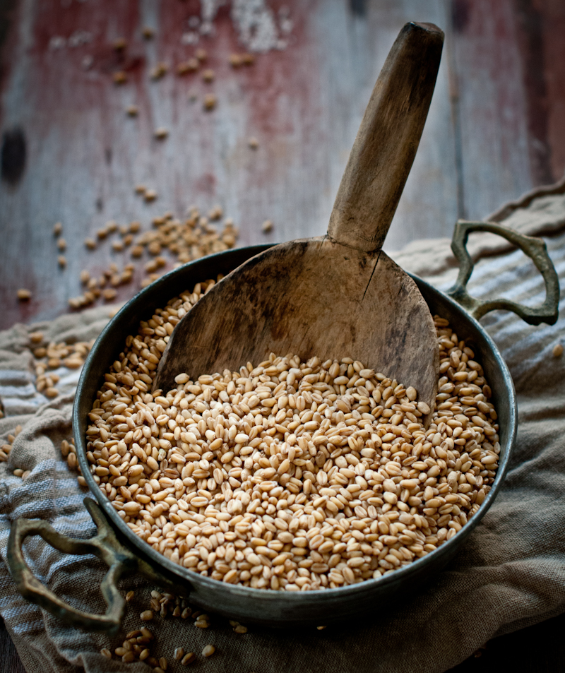 large rustic wooden spoon scooped into an iron bowl of wheat berries