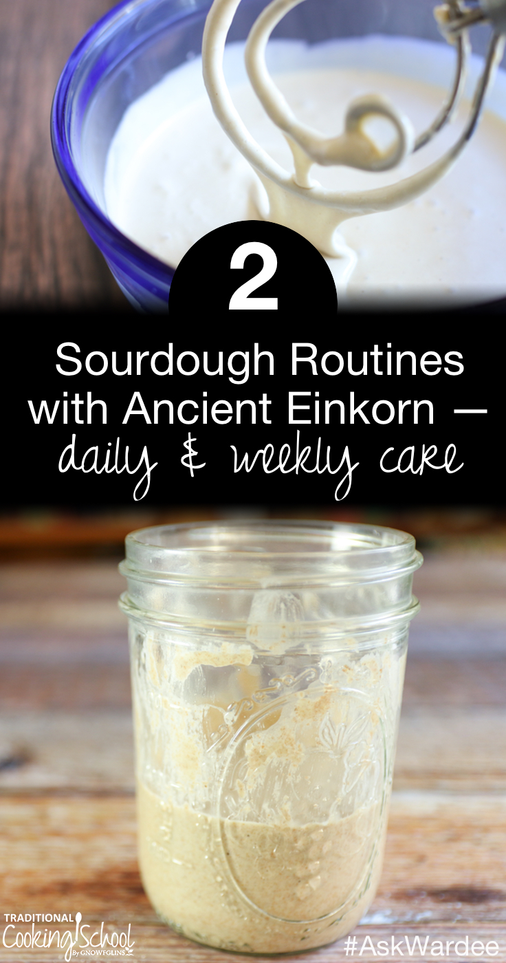 Since switching to ancient einkorn for baking, my sourdough routine has gone back and forth between daily and weekly care. Watch, listen, or read to learn about how my routine changes depending on the season and how we're eating. | AskWardee.tv