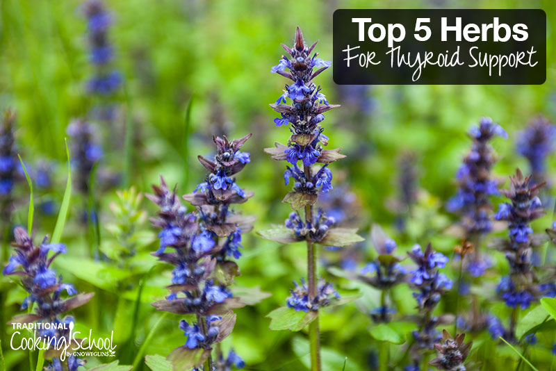 Top 5 Herbs For Thyroid Support | Although there are many herbs that support the thyroid, here are the top 5. The first 4 support an underactive thyroid, while the last herb helps soothe hyperthyroidism. | TraditionalCookingSchool.com
