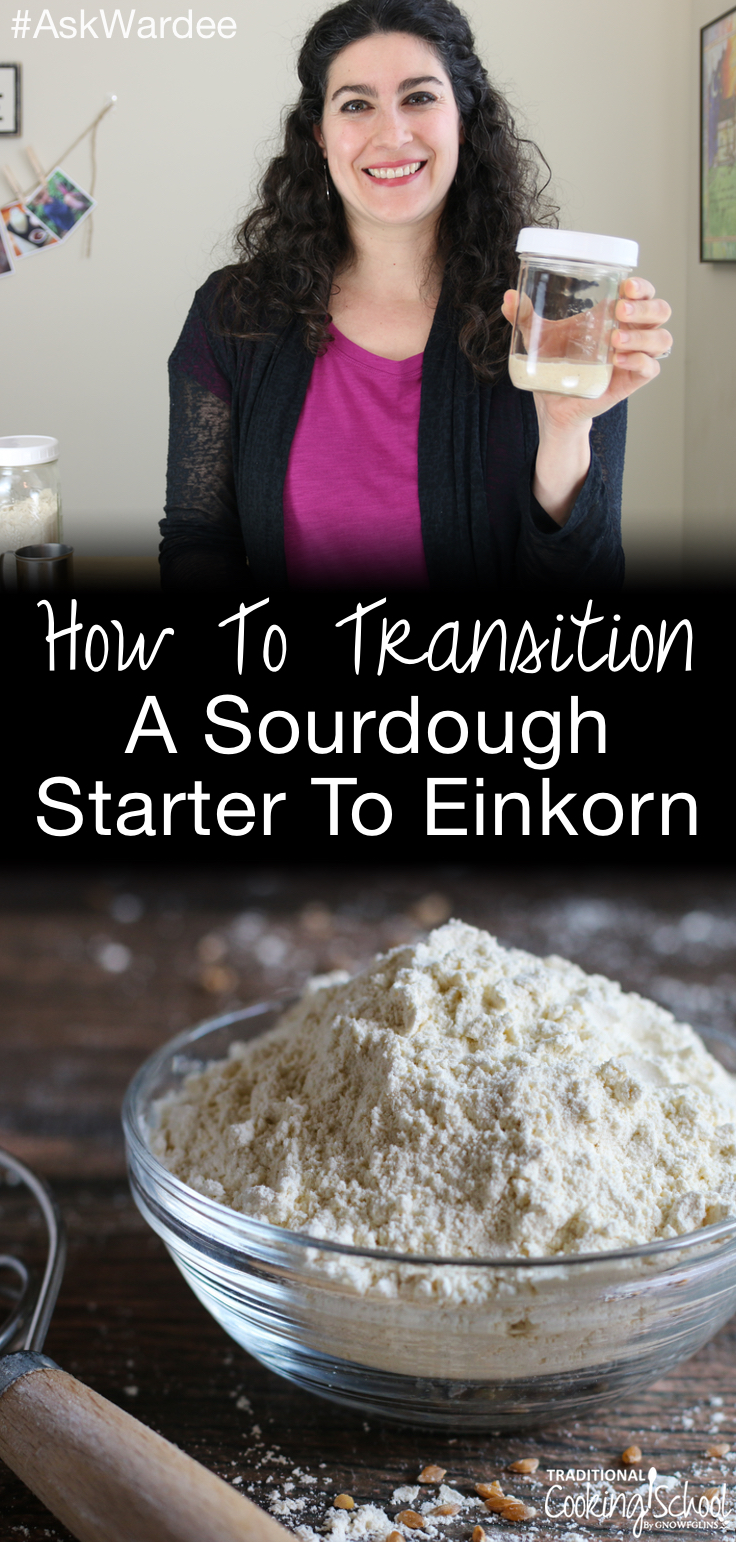You have a thriving sourdough starter, and now you're ready to transition to 5,000-year-old einkorn -- an ancient variety of wheat that's healthier and has less gluten than modern wheat. Watch, listen, or read to learn how to transition a sourdough starter to einkorn. Plus, get my FREE no-knead einkorn sourdough bread recipe! | AskWardee.tv