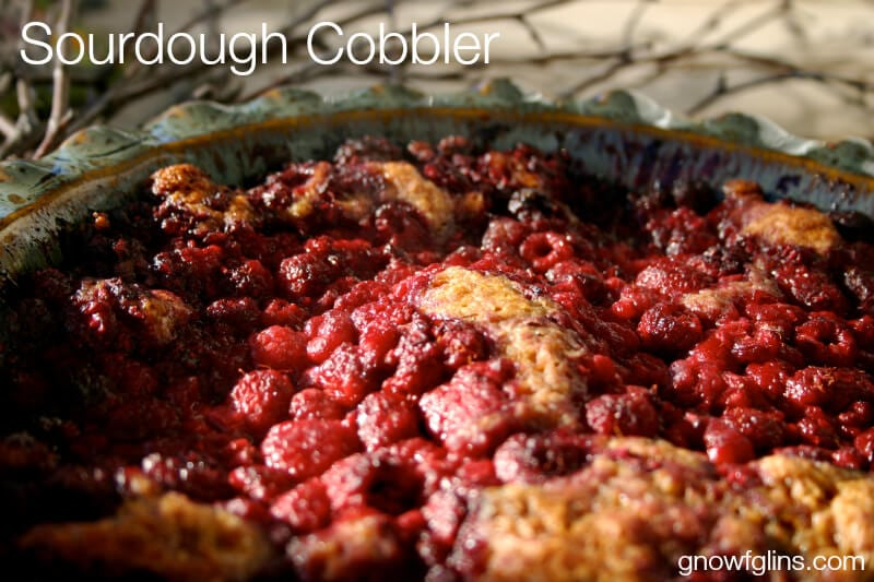 Sourdough berry cobbler in blue pie crock with white text overlay