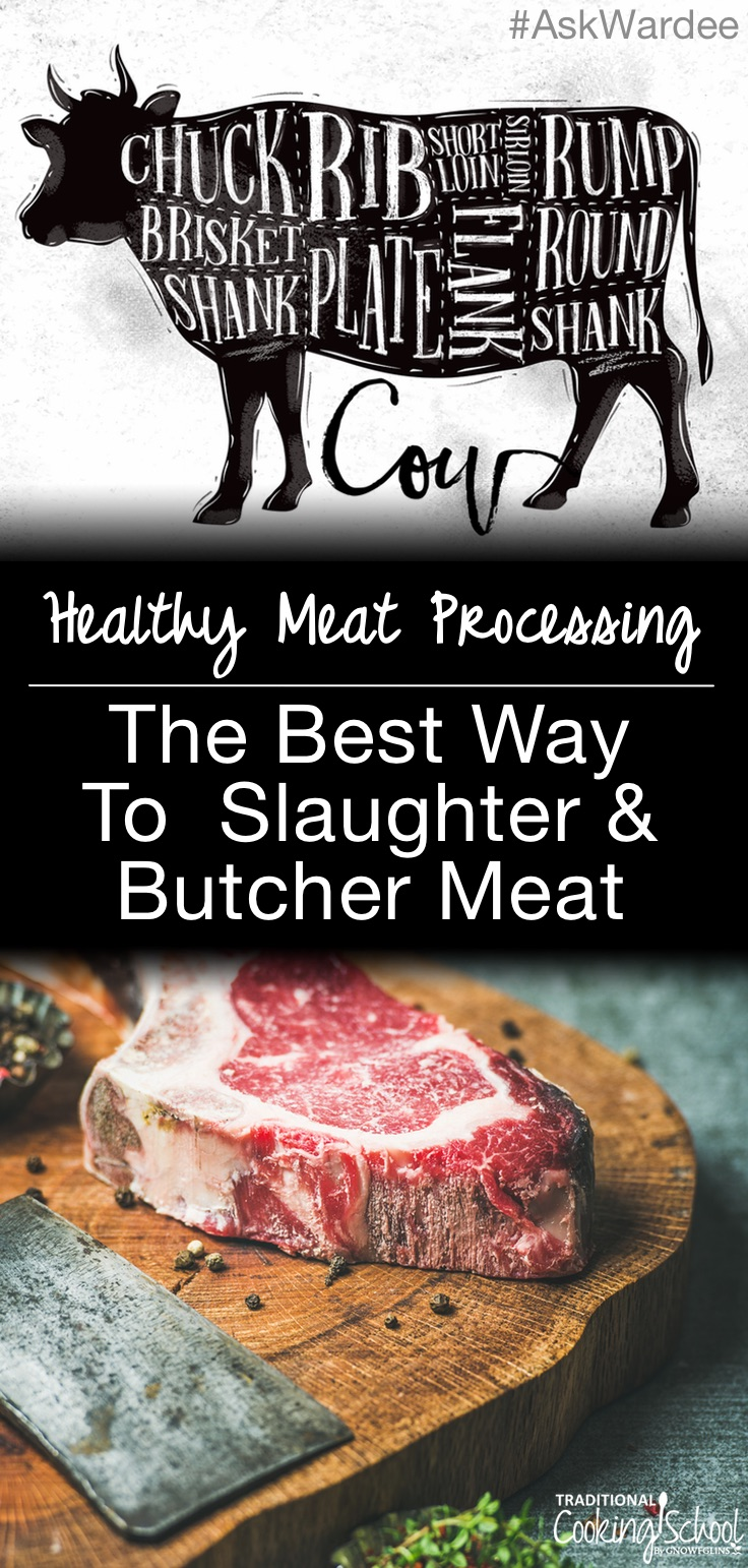 Healthy meat processing is kind to the animals and produces the best tasting meat! Watch, listen, or read for the best way to slaughter and butcher meat -- whether you're sourcing your meat from a local farm or doing the processing yourself!   AskWardee.tv