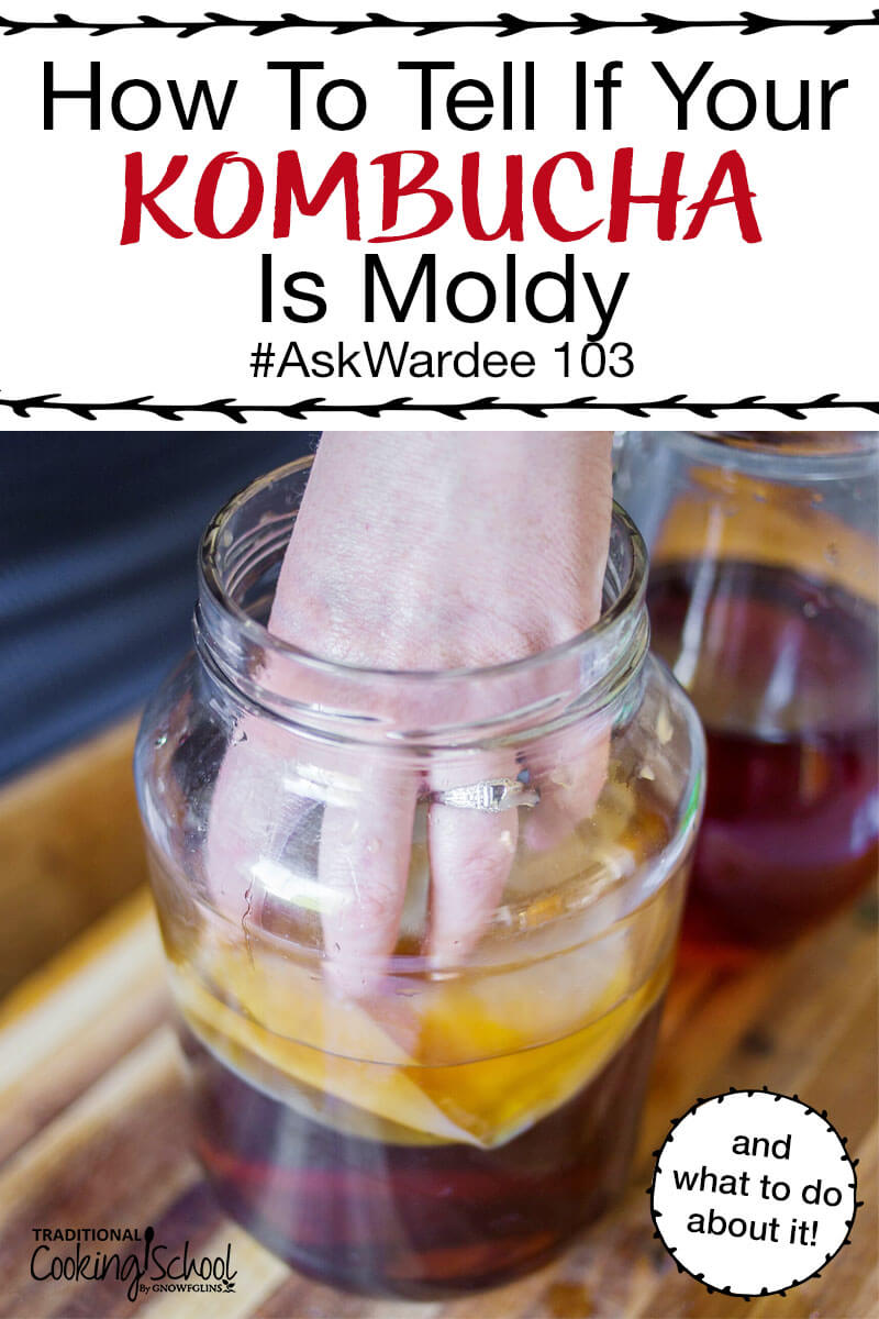 Did you know... Kombucha rarely grows mold? The SCOBY (mother culture) is quite hardy and balanced. Yet, mold does happen sometimes. Watch, listen, or read to learn how to tell if your Kombucha is moldy, plus what to do about it and how to prevent mold in future batches!