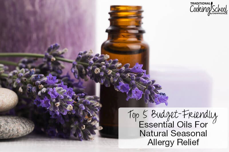 lavender essential oil with sprigs of lavender