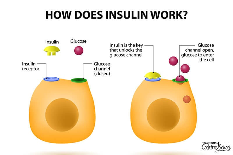 chart of how insulin works