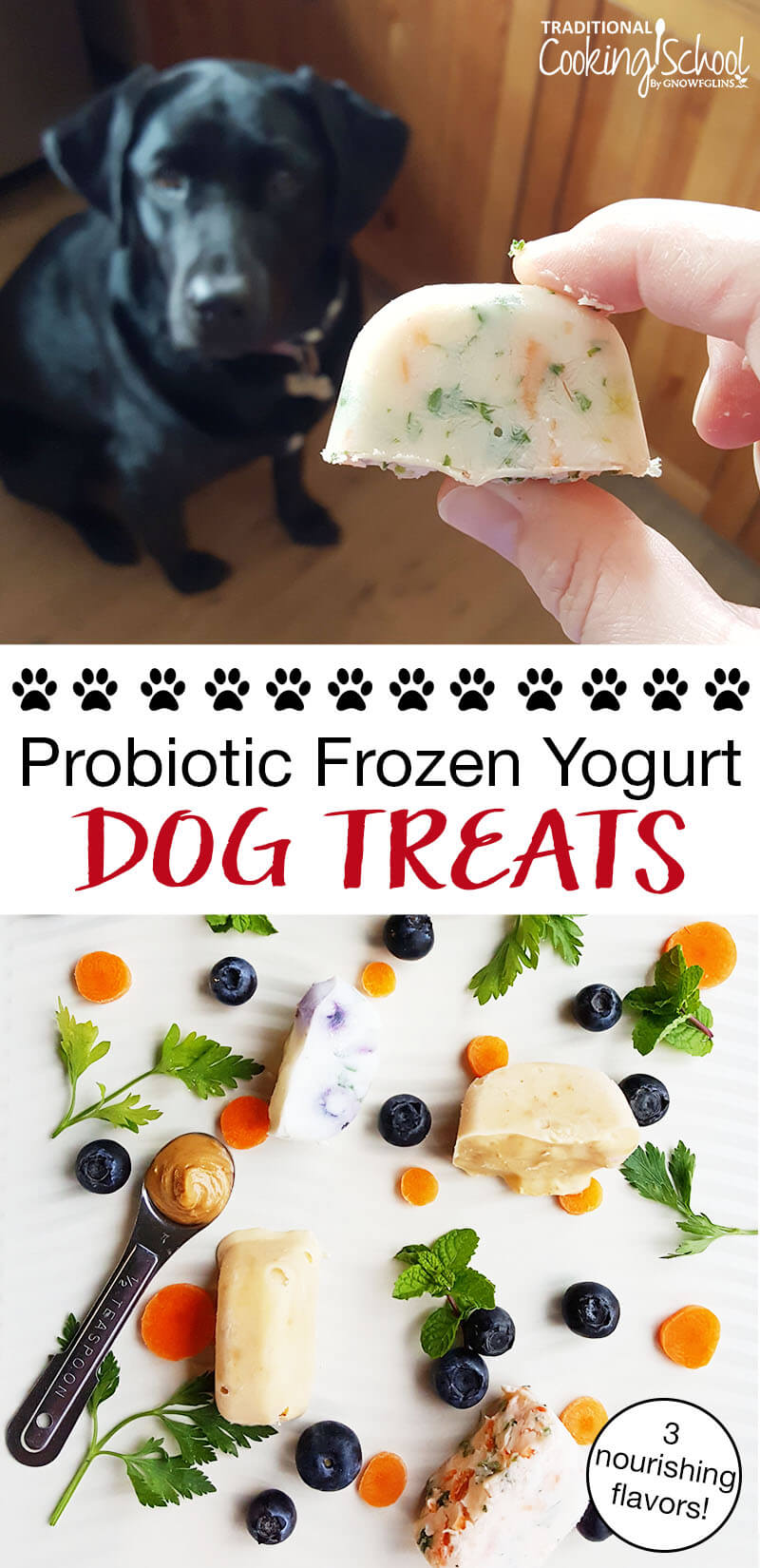 probiotic frozen yogurt dog treats with black lab and fresh blueberries and parsley