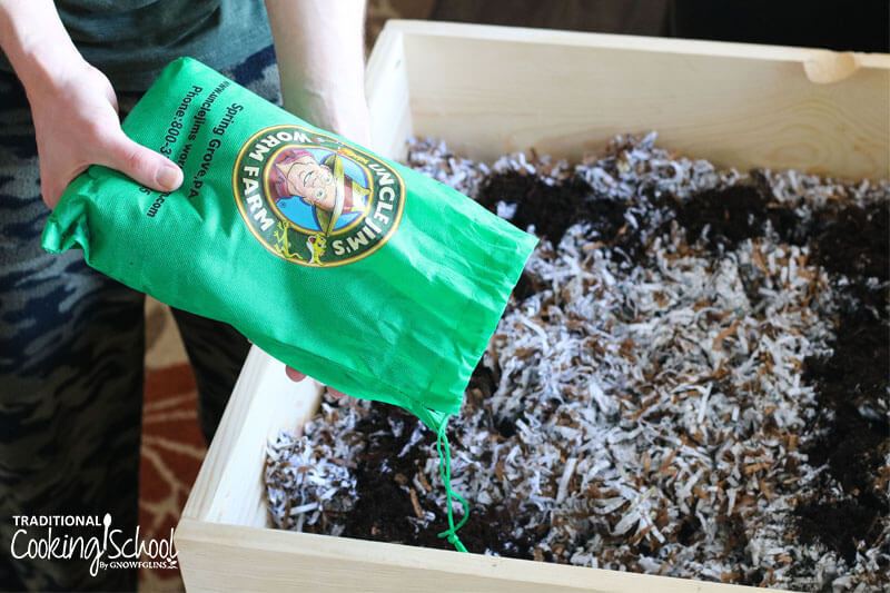 "man dumping a green drawstring pouch of worms, labelled ""Uncle Jim's Worm Farm"", into a waiting compost bin of freshly moistened shredded paper"