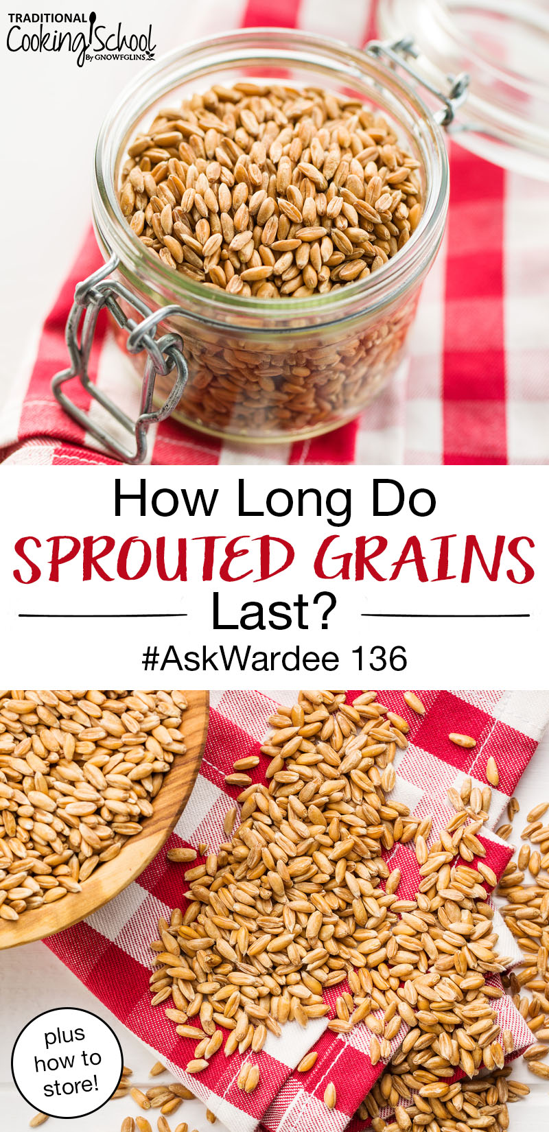 "photo collage of grain berries, in a wooden bowl, in a small glass jar, spilled out onto a red and white checkerboard cloth, with text overlay: ""How Long Do Sprouted Grains Last? (and how to store!) #AskWardee 136"""