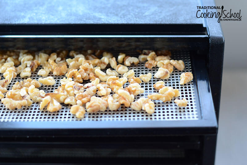 soaked walnuts on a dehydrator tray