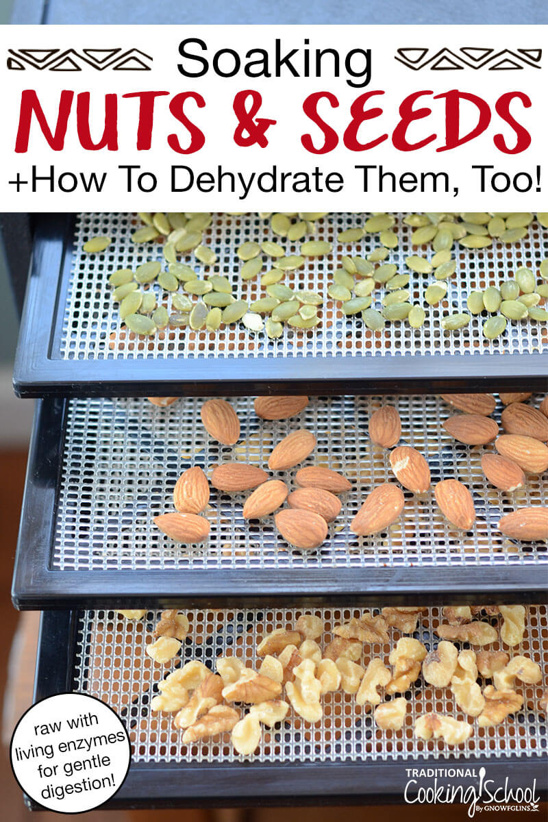 """dehydrator trays of walnuts, almonds, and pumpkin seeds, with text overlay: Soaking Nuts & Seeds + How To Dehydrate Them, Too! (raw with living enzymes for gentle digestion!)"""""""