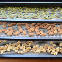 dehydrator trays of walnuts, almonds, and pumpkin seeds