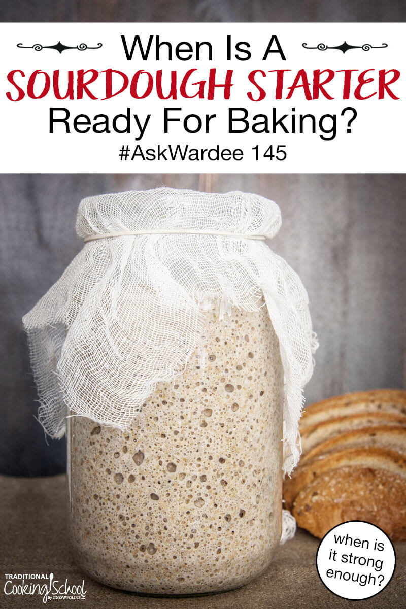 "large jar full of bubbly sourdough starter secured at the top with cheesecloth and a rubber band, with text overlay: ""When Is A Sourdough Starter Ready For Baking? #AskWardee 145 (when is it strong enough?)"""