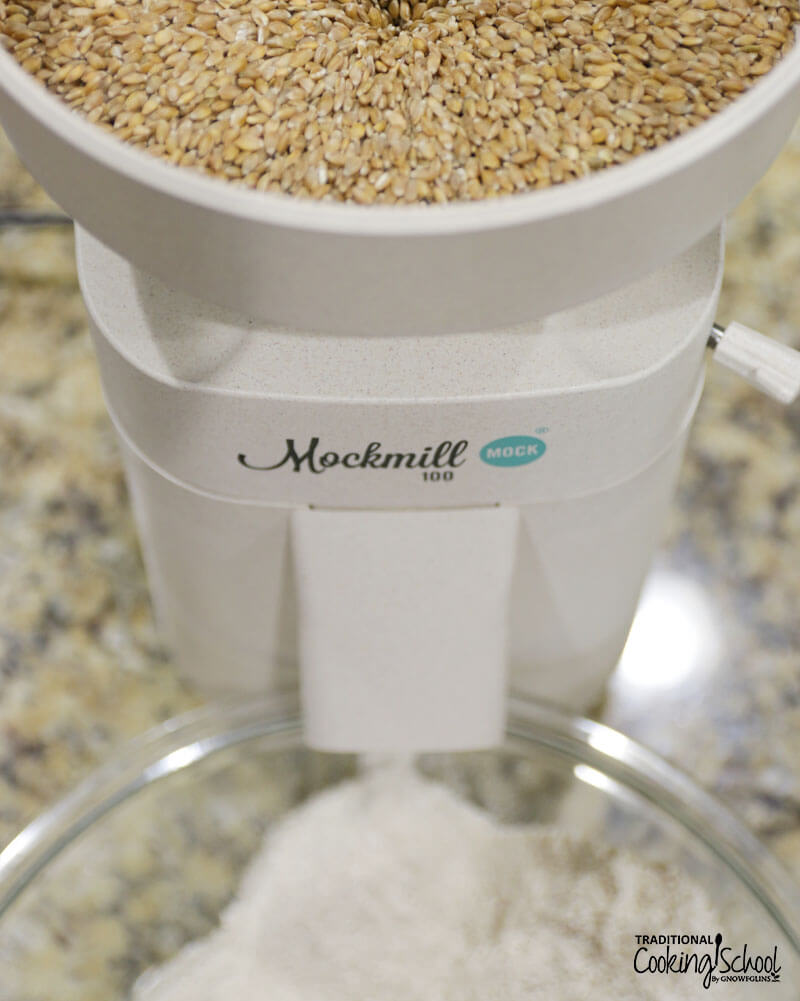 overhead shot of the home grain mill, the Mockmill, grinding berries into flour
